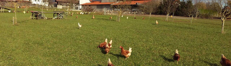 Geflügelhof Dürr Bio Hühnerhaltung