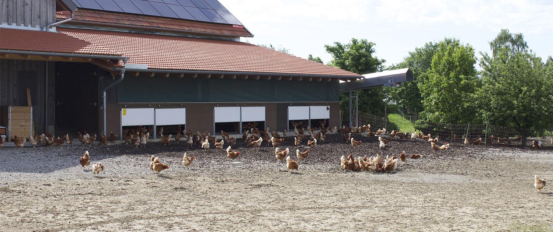 Hühnerstall mit Freilauf